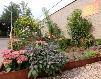 bevorderen-biodiversiteit-hoge-en-lage-planten