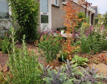 nieuwe-en-hergebruikte-planten-duurzame-mix