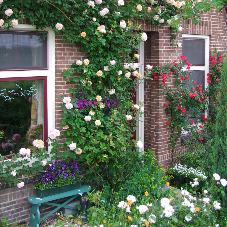 Tuintip maart rozen snoeien