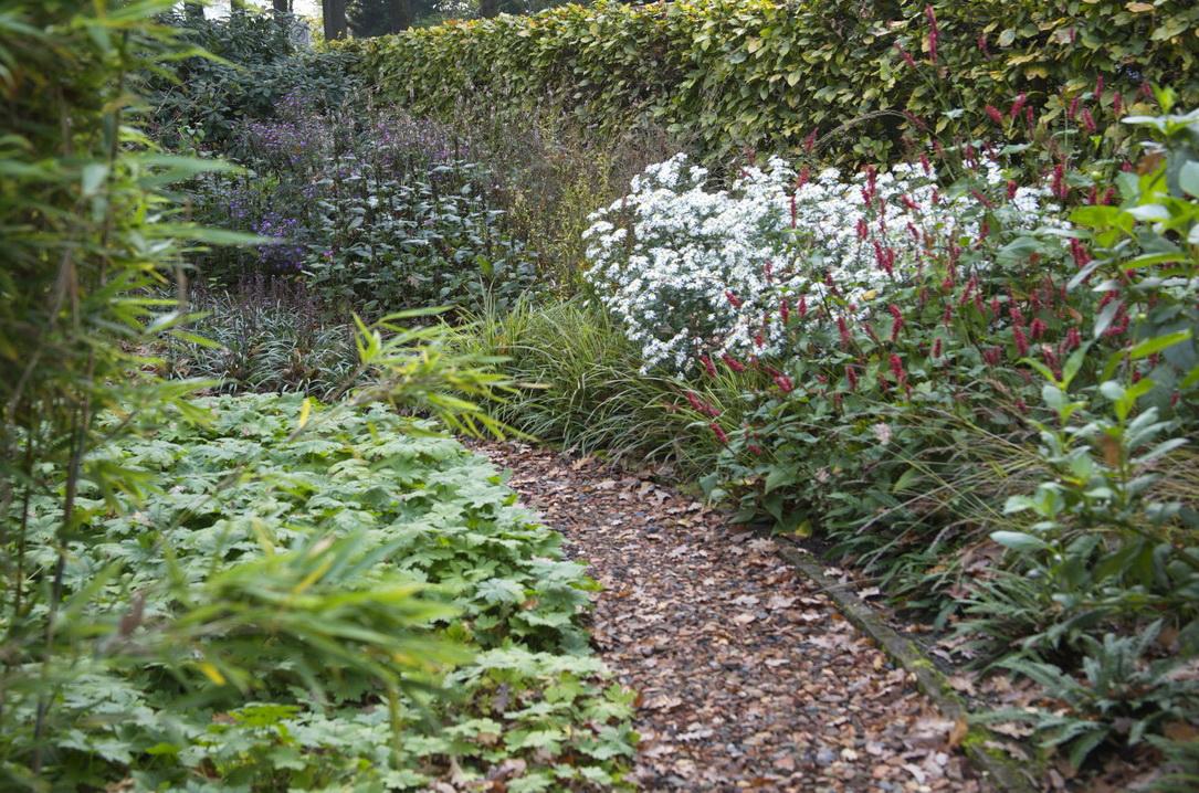 Super Schaduw planten Foto Anneke Beemer - Lekker in je tuin CD-03